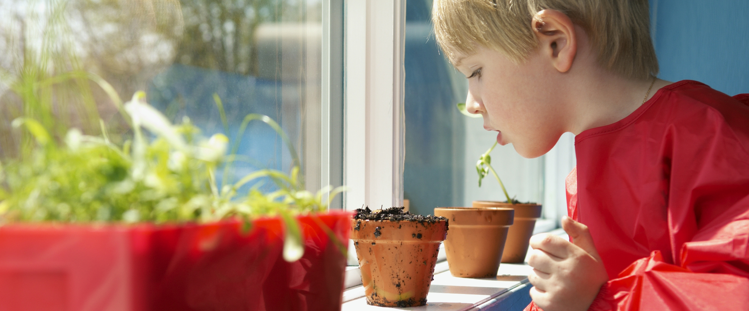 young boy in classroom looking at plants